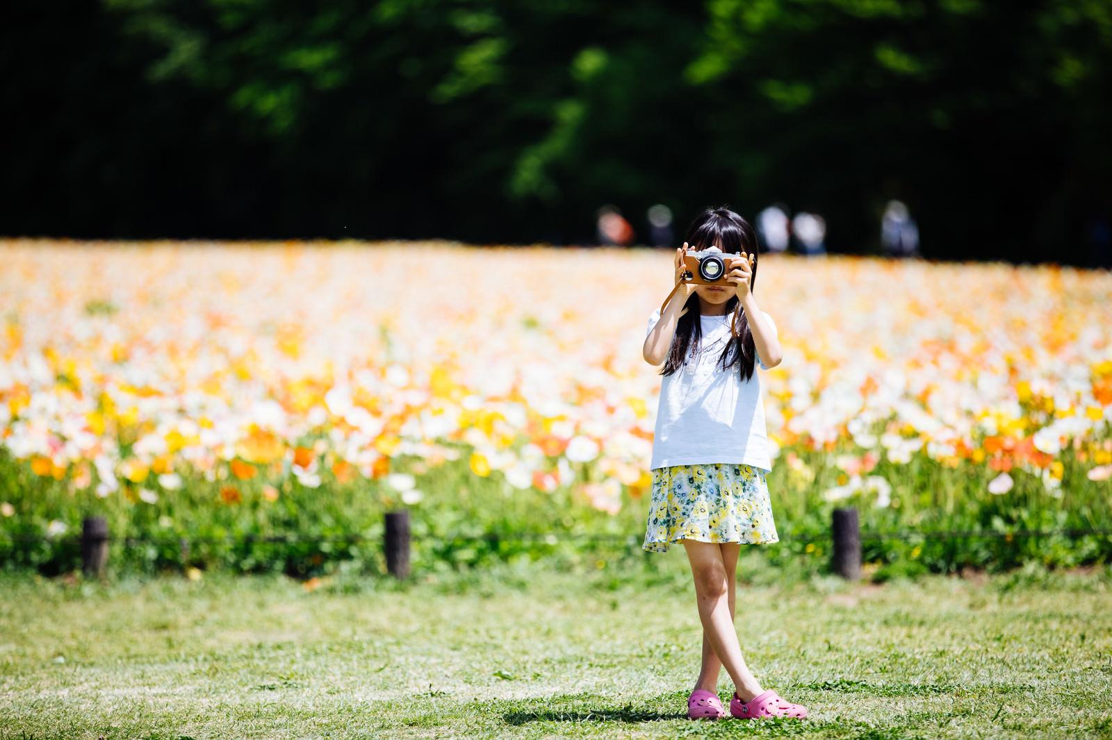 「アイスランドポピーの花畑でカメラを構える女の子」の写真[モデル:あんじゅ]