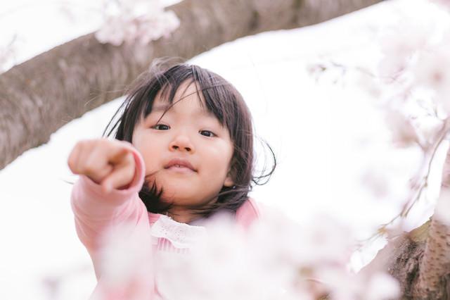 花見の季節、場所取りを気にする娘の写真