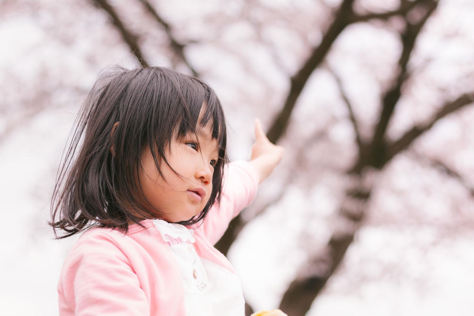 「あれは梅なのか桜なのか聞いてくる子供」の写真[モデル:あんじゅ]