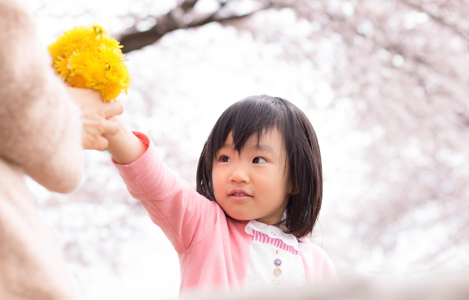 「たんぽぽで花束作ったよ!たんぽぽで花束作ったよ!」[モデル:あんじゅ]のフリー写真素材を拡大