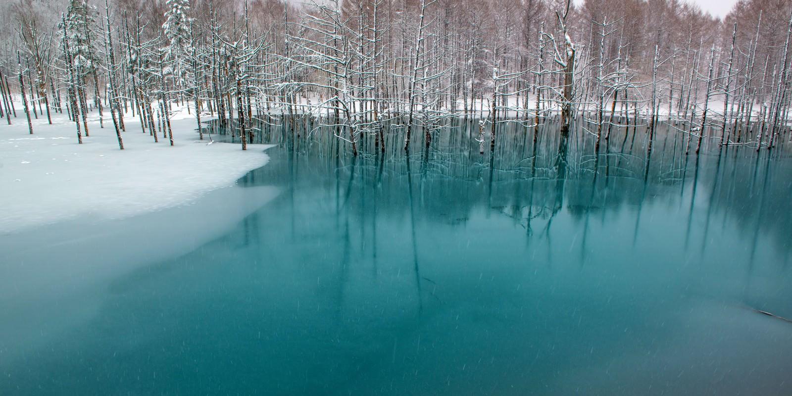 「北海道美瑛の青い池北海道美瑛の青い池」のフリー写真素材を拡大