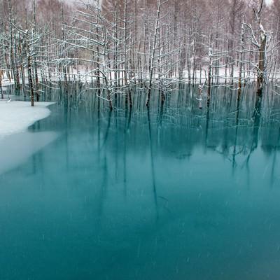 「北海道美瑛の青い池」の写真素材
