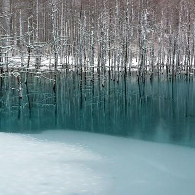 「青い池と雪」の写真素材