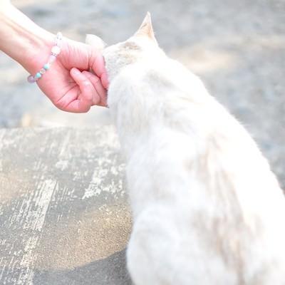 「哲学の道にいた猫」の写真素材