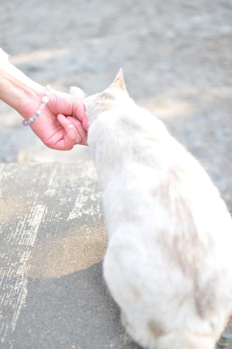 「哲学の道にいた猫」の写真