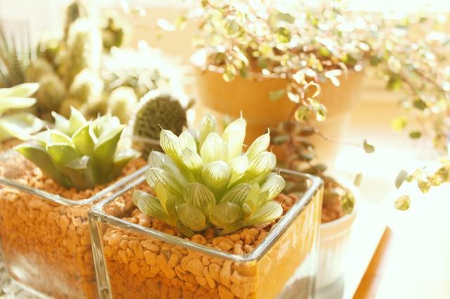 窓辺の植物の写真