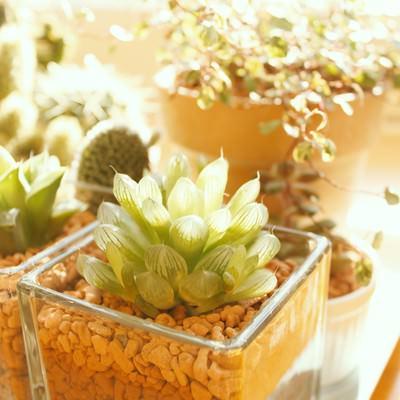 「窓辺の植物」の写真素材