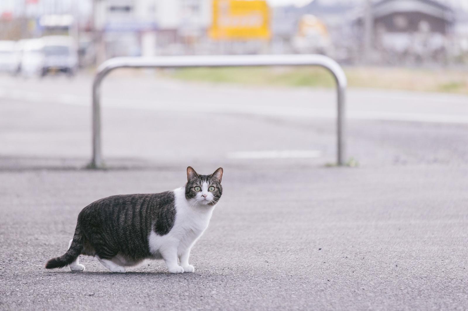「白昼に飼い主の浮気現場を目撃して驚愕を隠せない猫」の写真