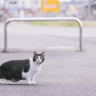 「白昼に飼い主の浮気現場を目撃して驚愕を隠せない猫」の写真素材