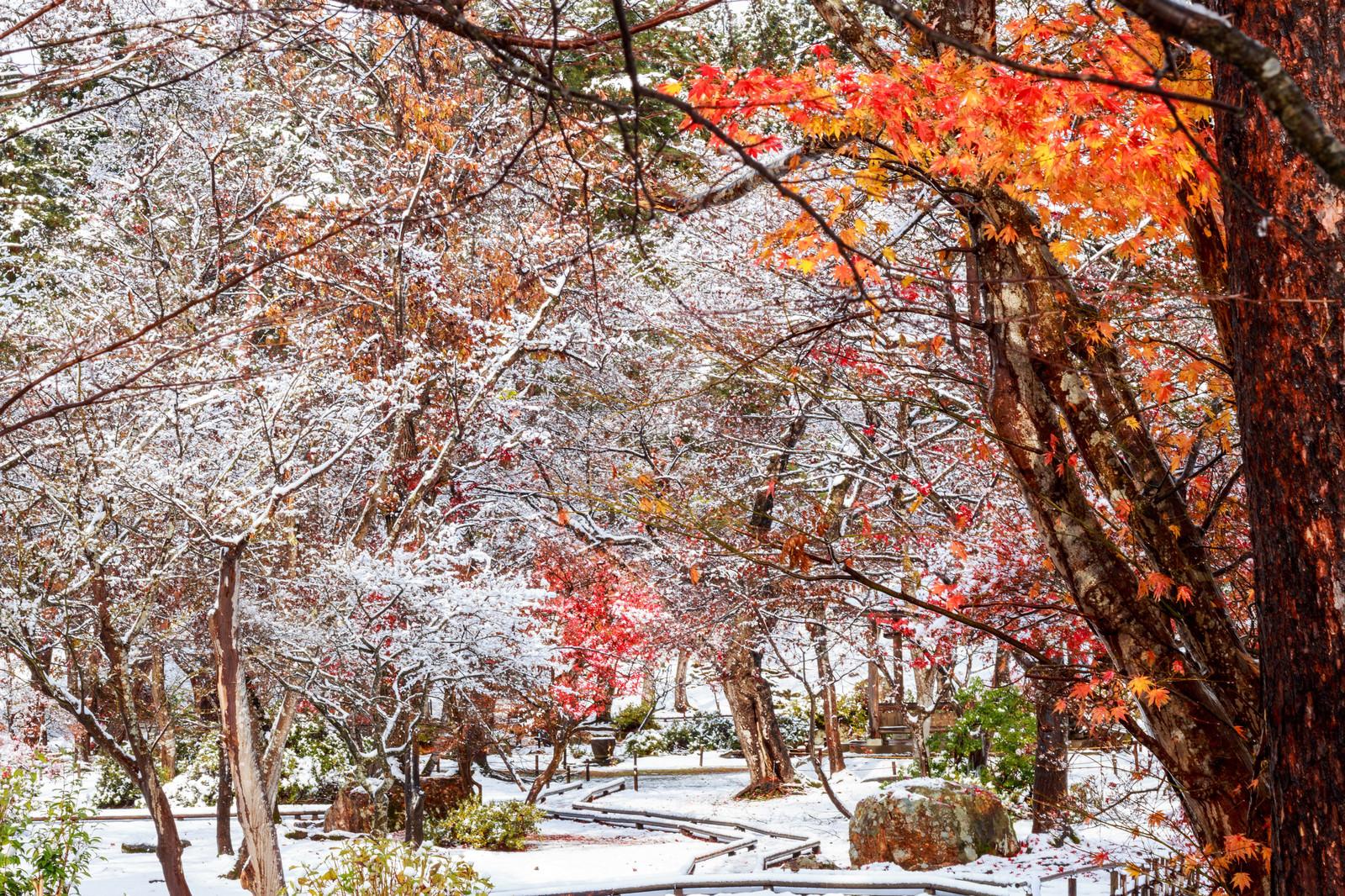 「紅葉と雪の庭紅葉と雪の庭」のフリー写真素材を拡大