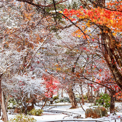 紅葉と雪の庭の写真