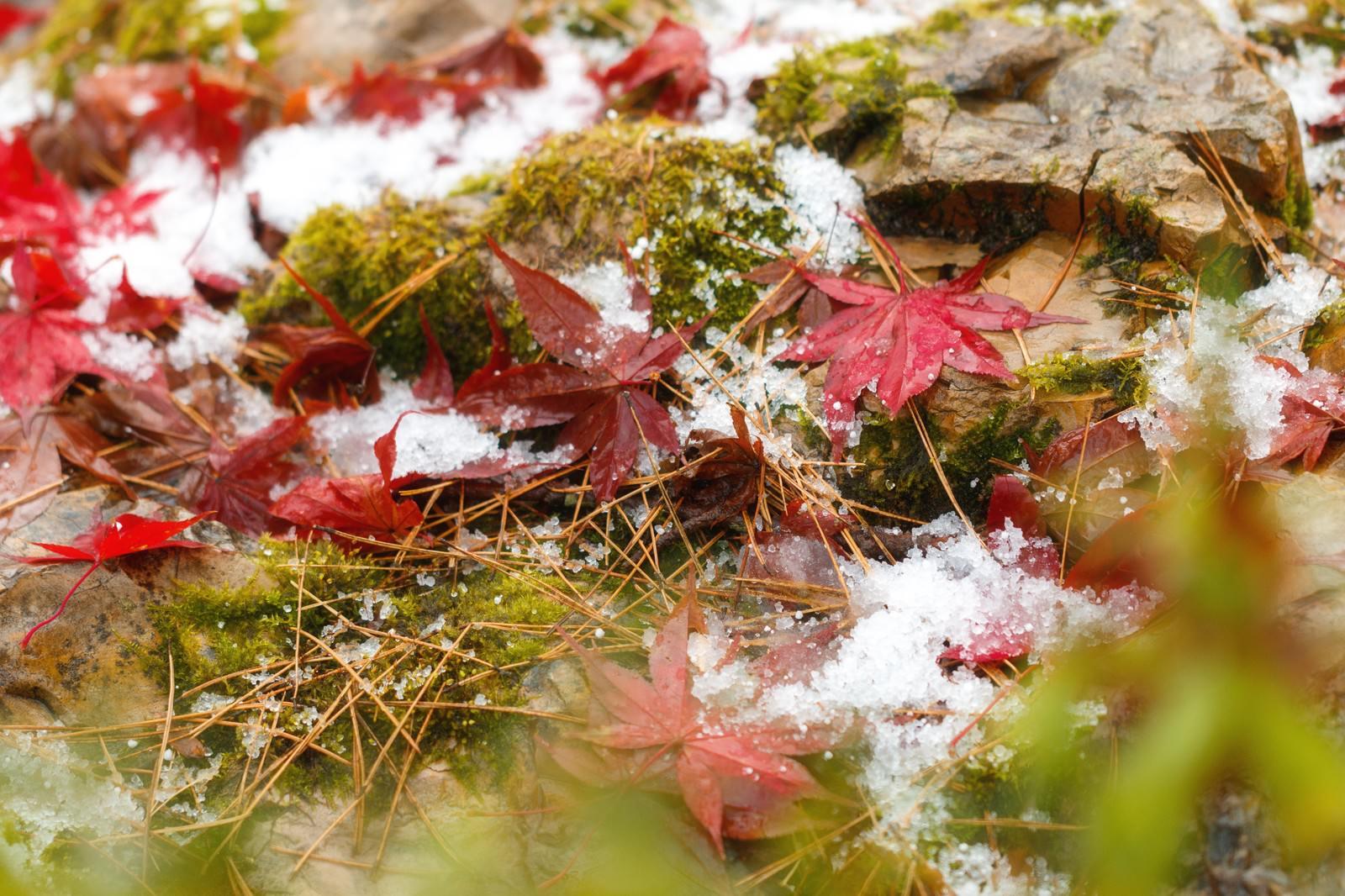 「苔と雪と落ち葉」の写真