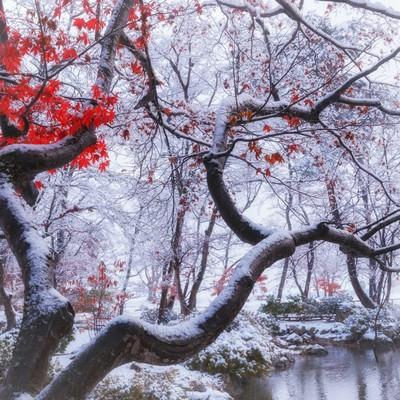 雪が降った晩秋の庭園の写真