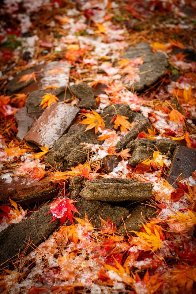 雪まじりの落ち葉の写真