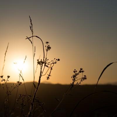 「夕陽に照らされた草」の写真素材