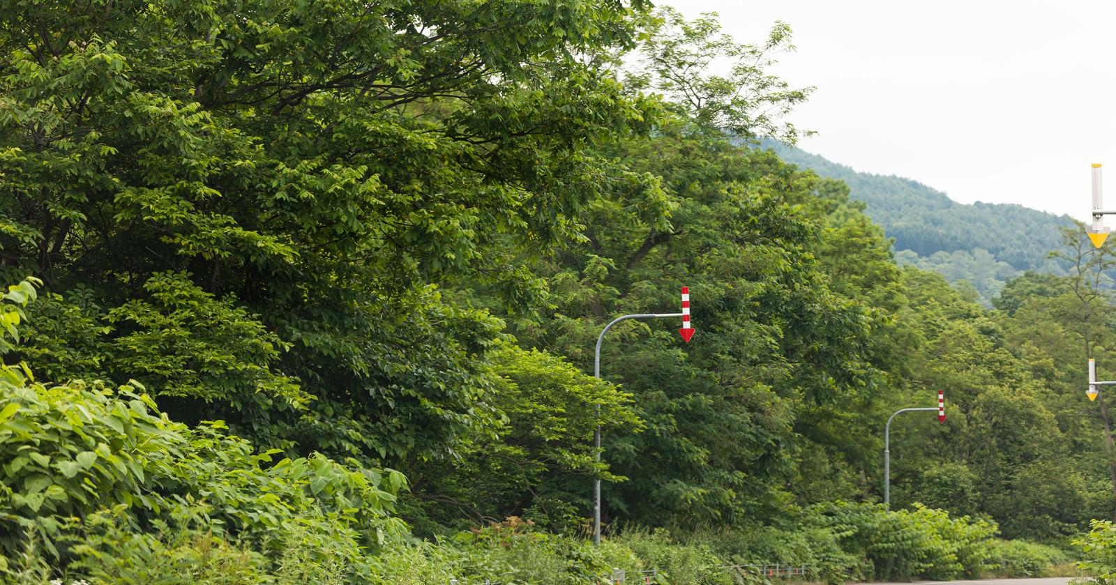 「山道の矢羽根(固定式視線誘導柱)」の写真