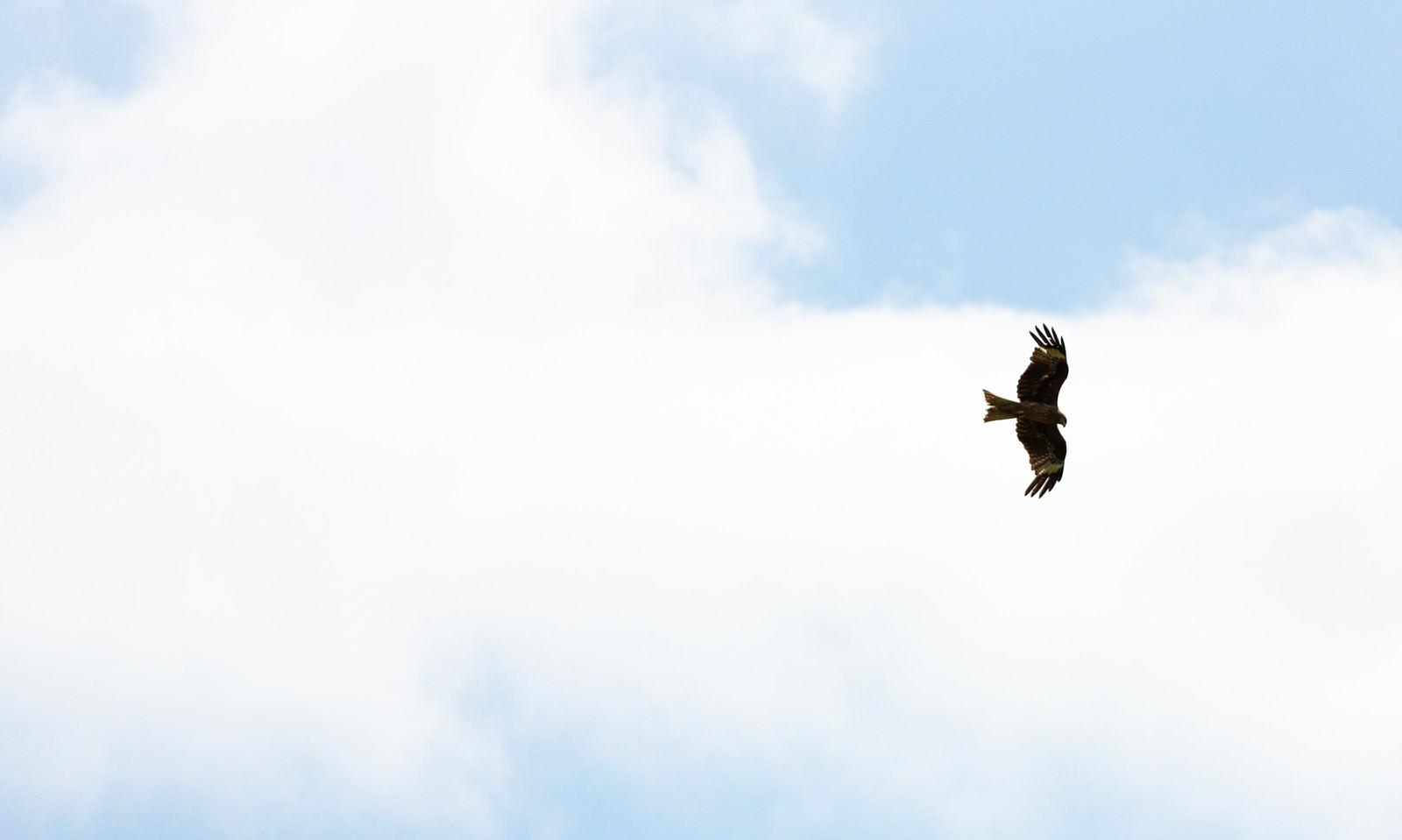 「大空を飛び回る鳥」の写真
