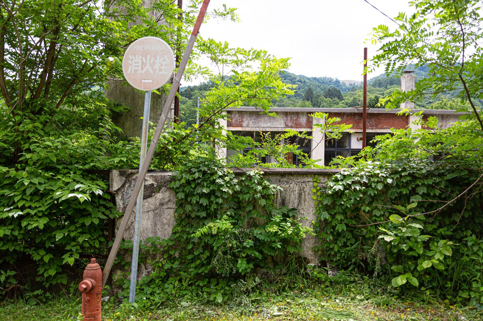 「緑が生い茂る我路郵便局の裏手」の写真