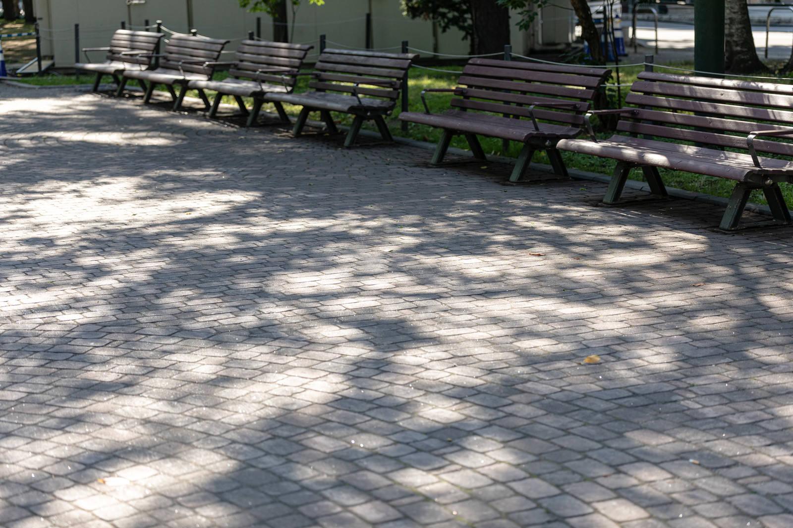 「木漏れ日の影とベンチ」の写真