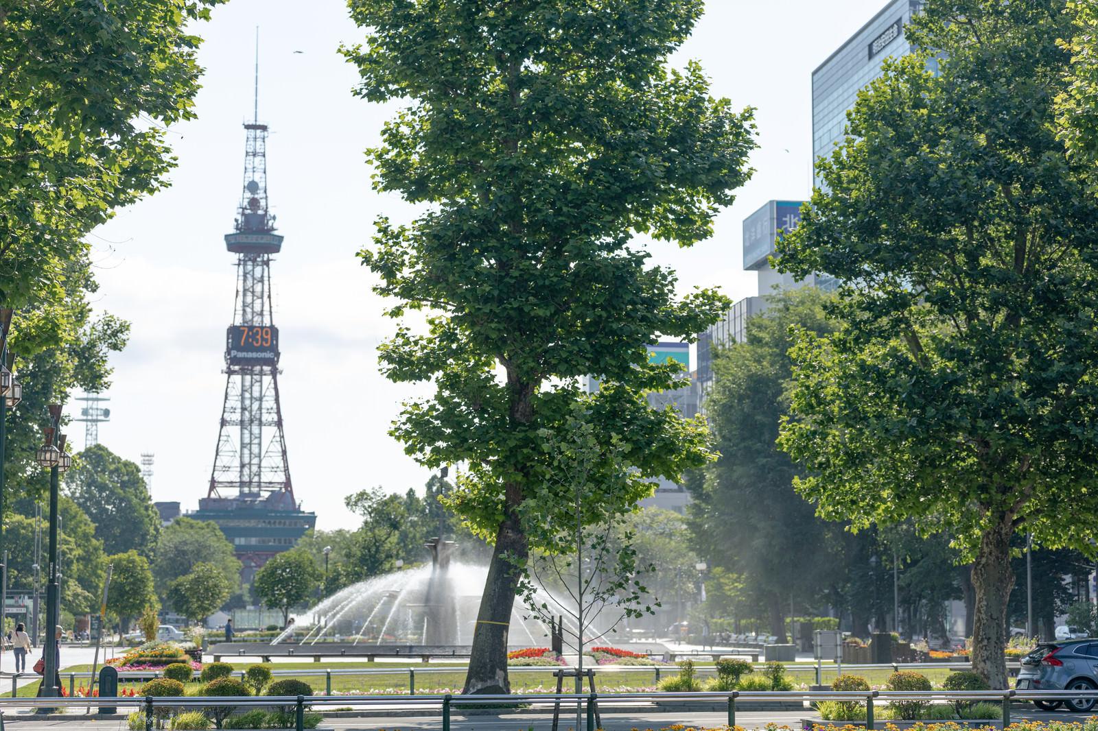 「大通公園の風景(北海道札幌市中央区)」の写真