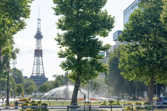 大通公園の風景(北海道札幌市中央区)の写真