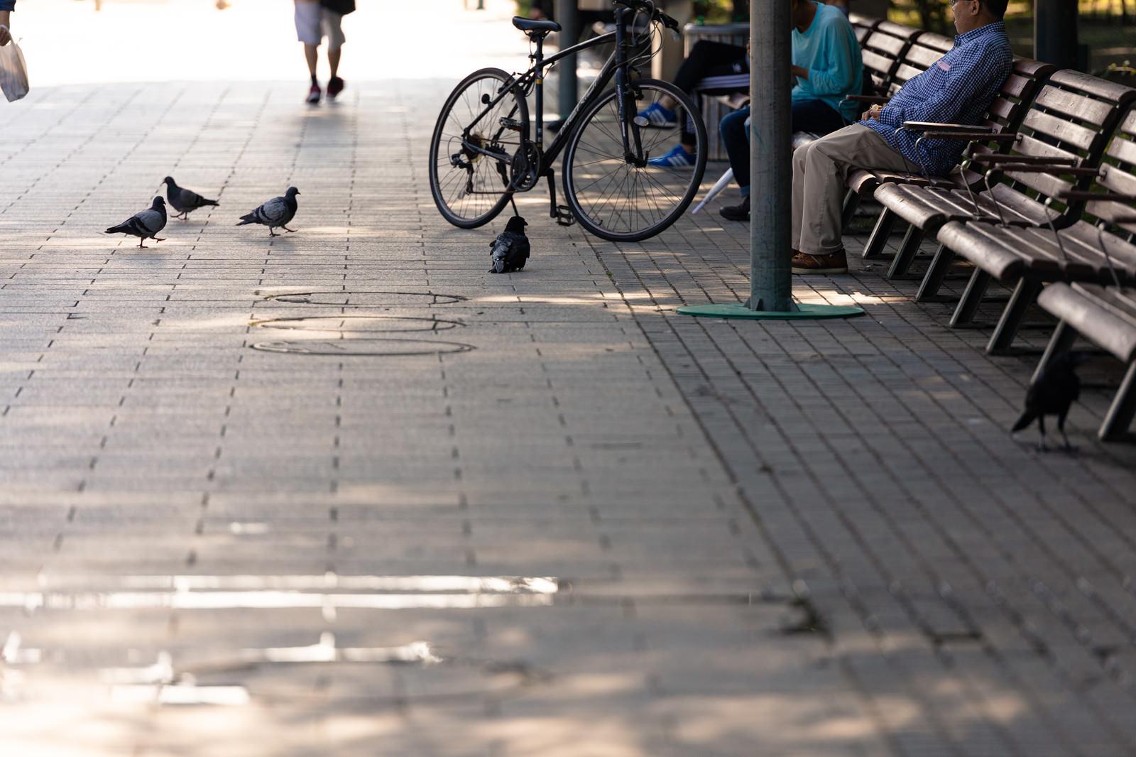 「ベンチに座っている人から餌待ちの鳩とカラス」の写真