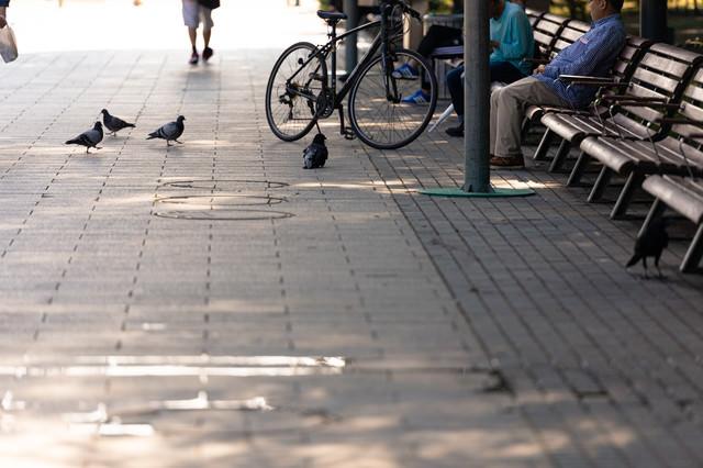 ベンチに座っている人から餌待ちの鳩とカラスの写真
