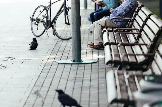 ベンチに座るご年配と食べ物を狙うカラスの写真