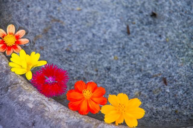 水面に浮かぶカラフルな花の写真