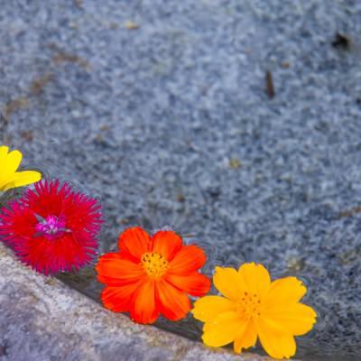 「水面に浮かぶカラフルな花」の写真素材