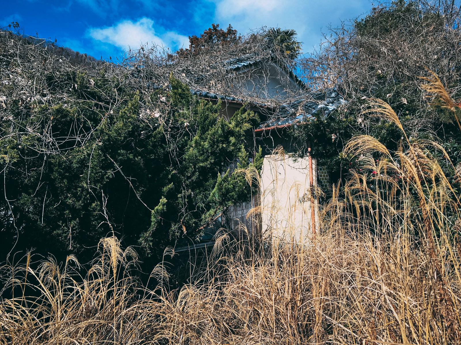 「雑草に覆われ踏み込むのも困難な廃屋」の写真