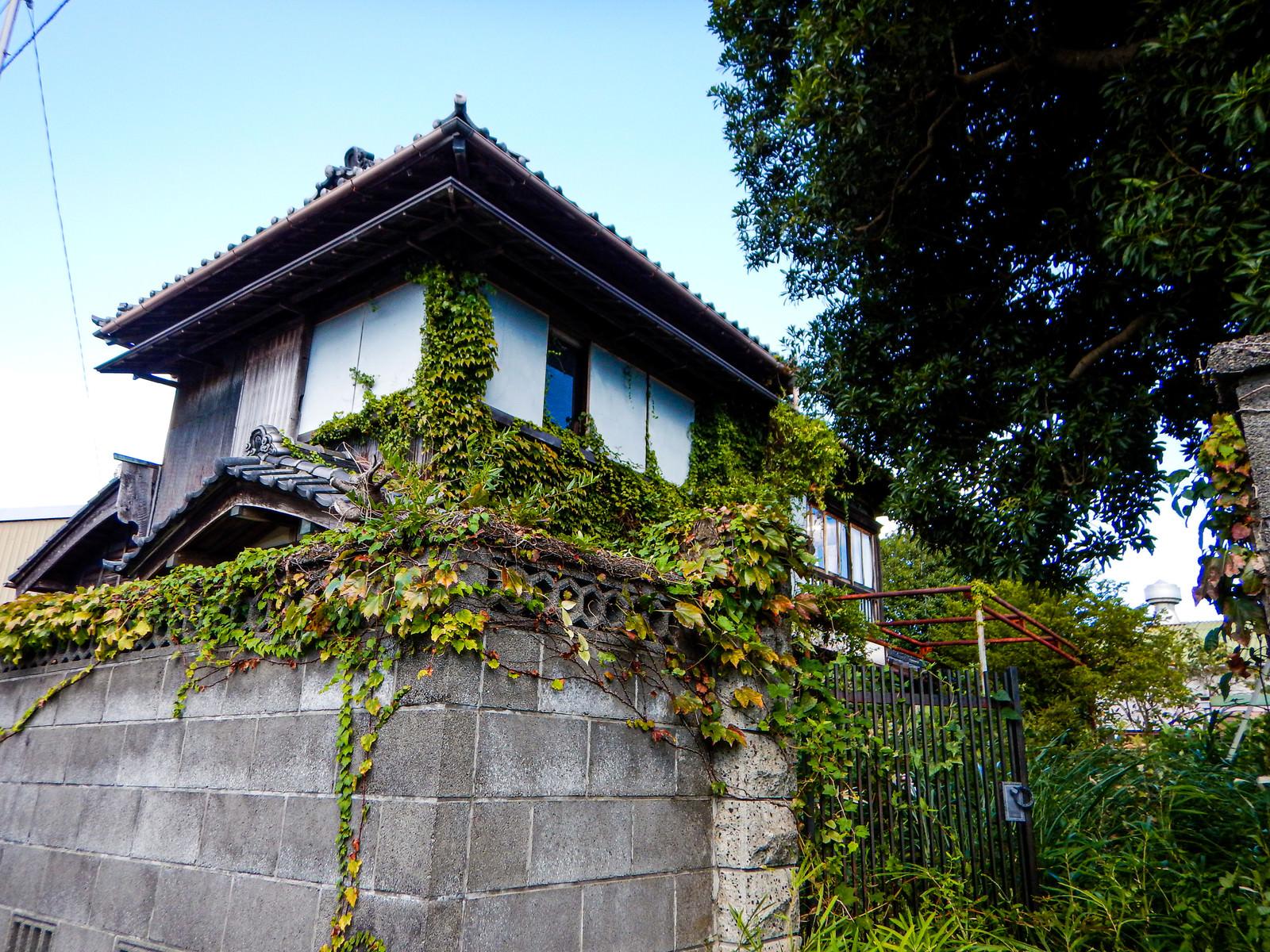 「ツタの張った廃屋の一軒家」の写真