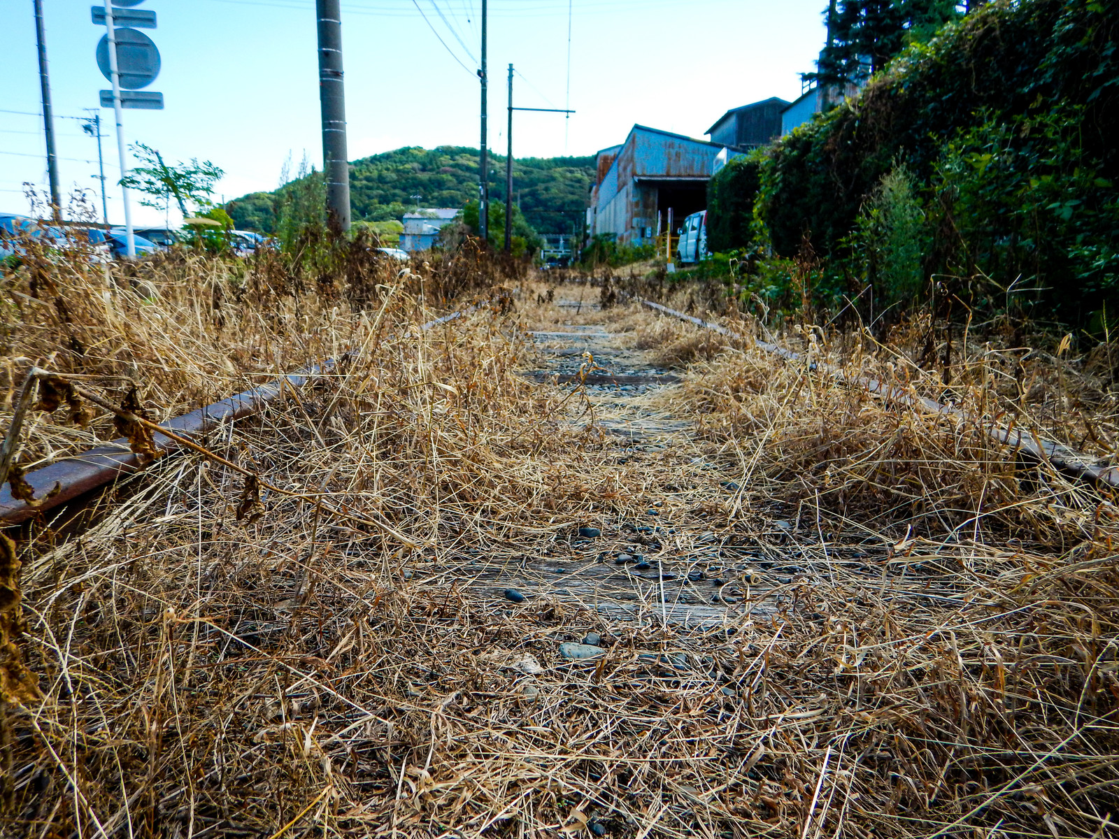 「枯草で覆われた廃線」の写真