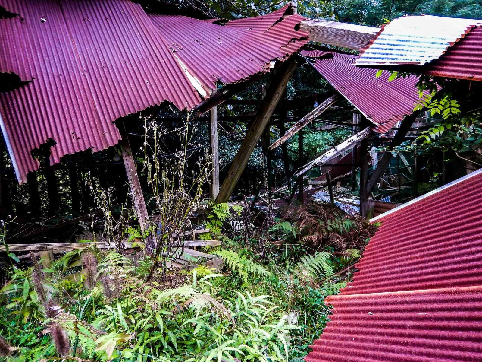 「崩れ落ちたトタン屋根(養鶏場跡)」の写真