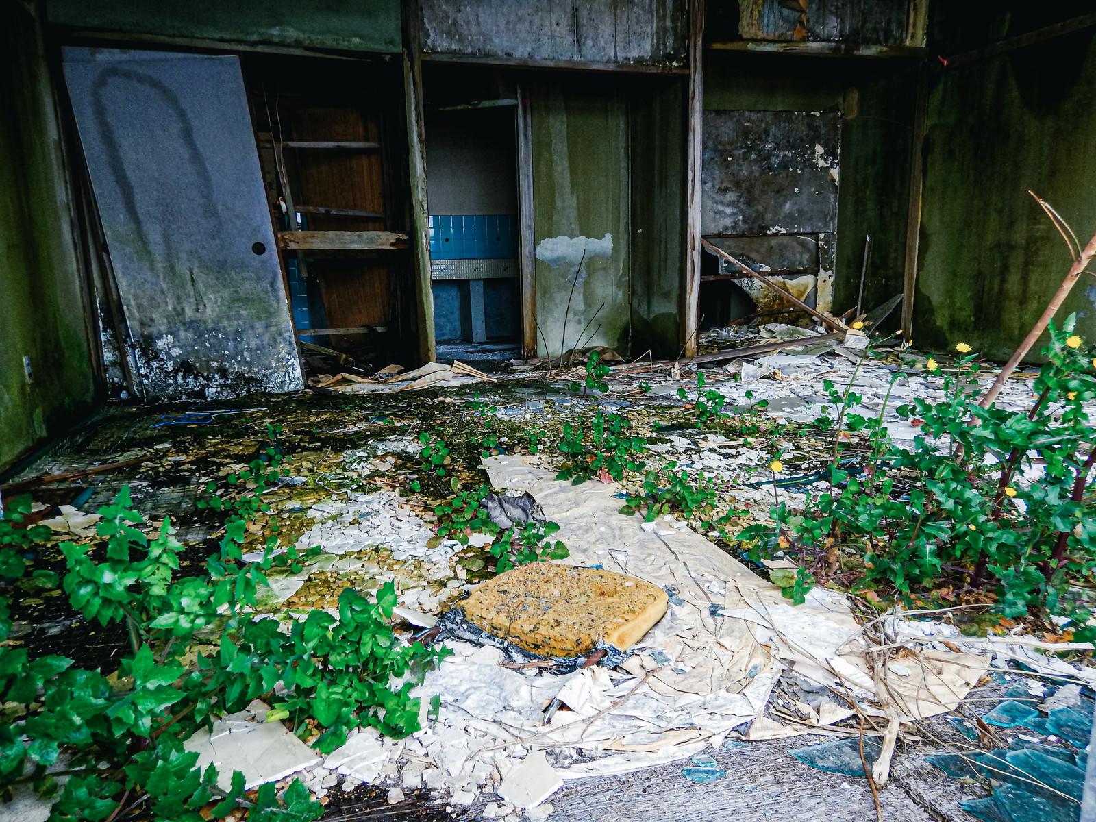 「廃墟に芽生える生命」の写真