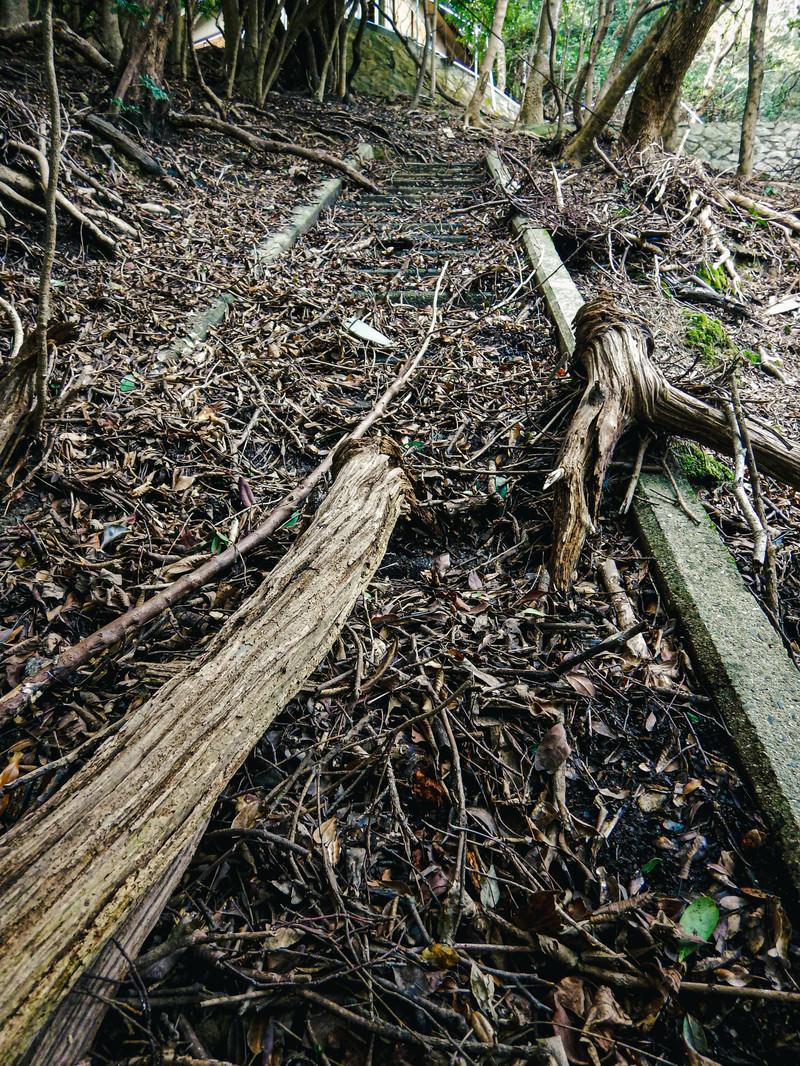 「廃墟の木片」の写真
