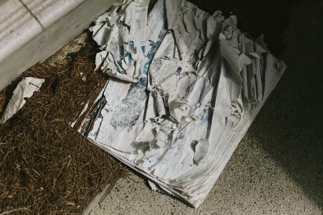 数年間雨ざらしで投棄された雑誌の写真