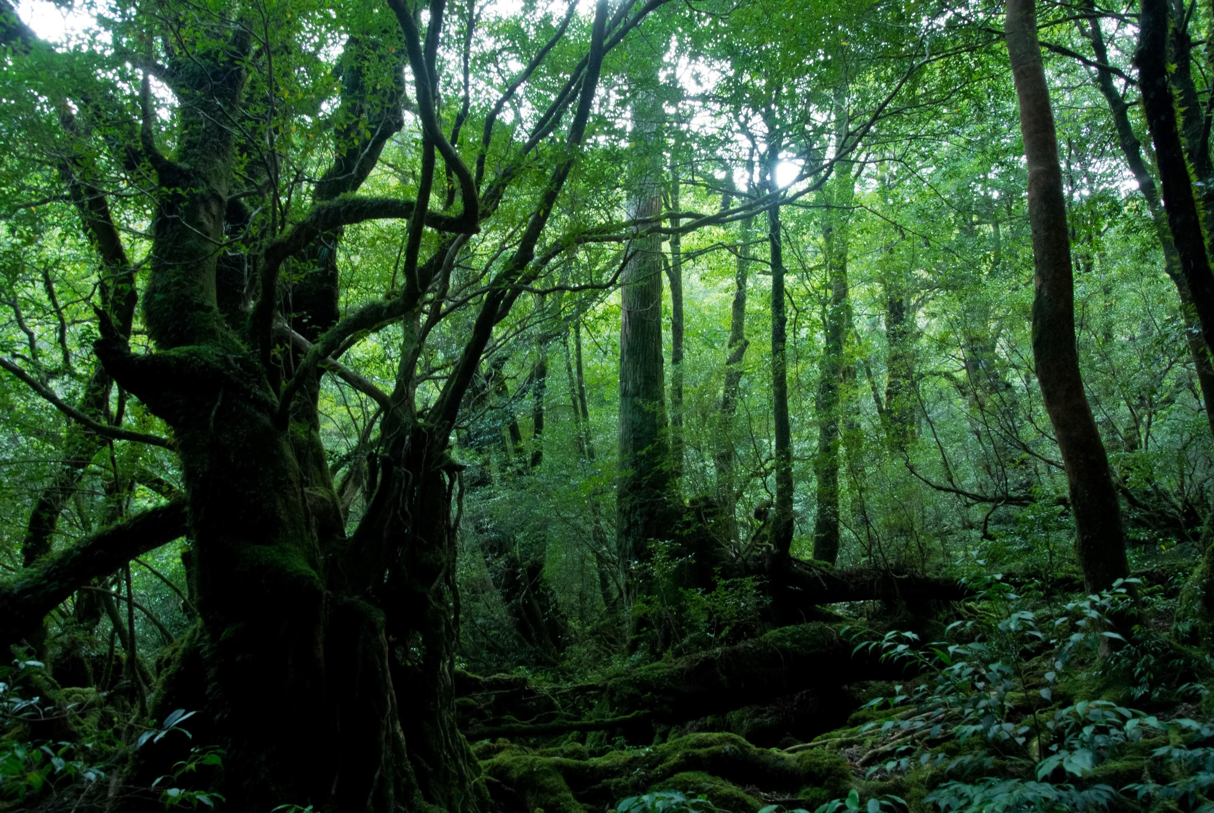 屋久島の森無料の写真素材はフリー素材のぱくたそ