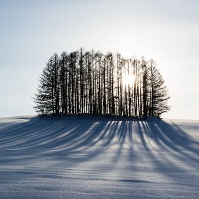 「雪とマイルドセブンの丘」の写真素材