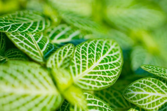 緑の葉っぱの写真
