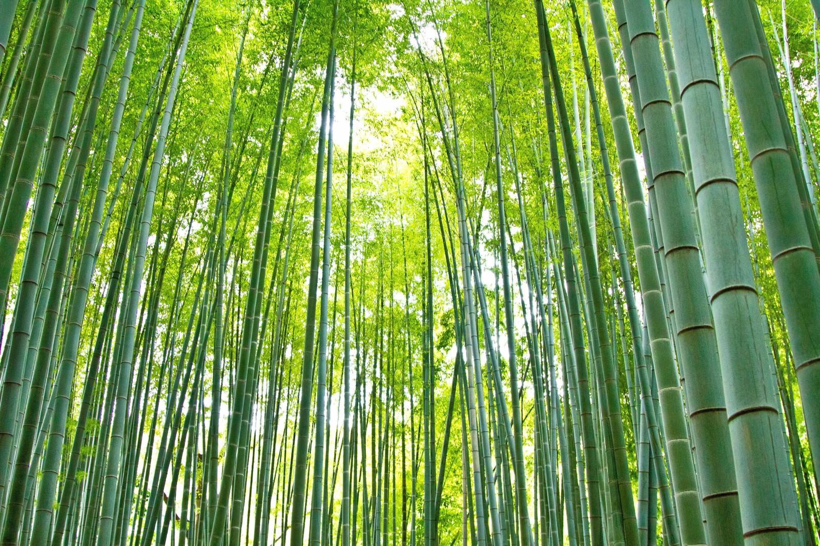 「お寺の竹林と日差し」の写真