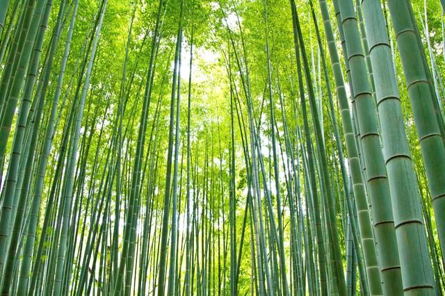 お寺の竹林と日差しの写真