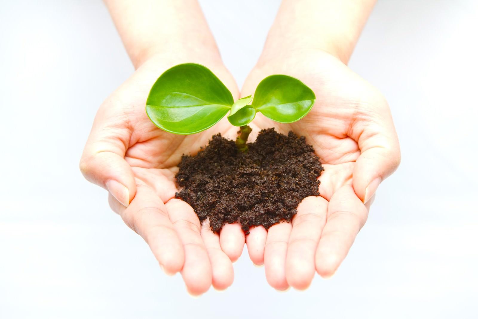 「手のひらの苗(環境・エコ)手のひらの苗(環境・エコ)」のフリー写真素材を拡大