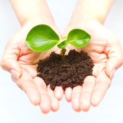 手のひらの苗(環境・エコ)の写真