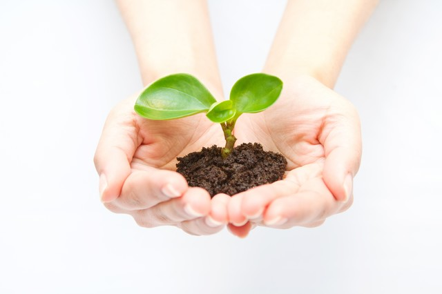 苗木を持つ手(エコ・地球環境)の写真