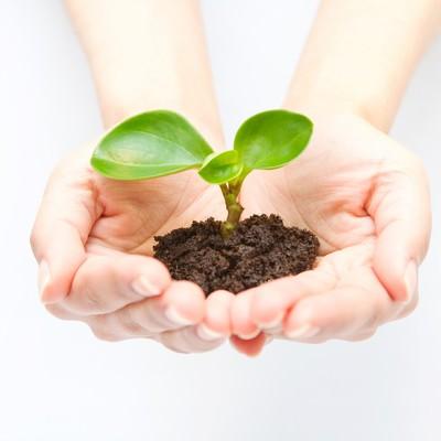「苗木を持つ手(エコ・地球環境)」の写真素材
