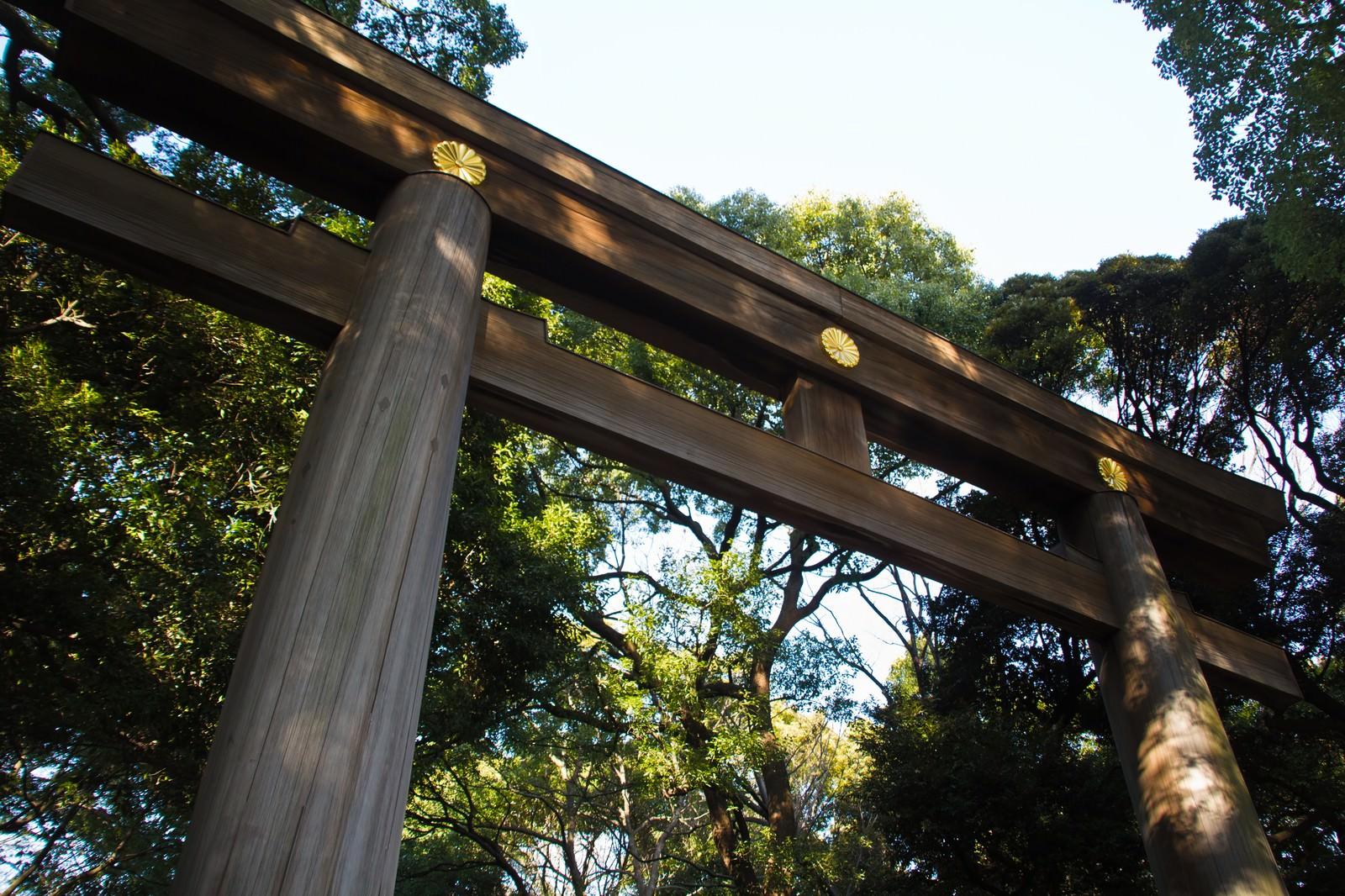 「明治神宮の鳥居明治神宮の鳥居」のフリー写真素材を拡大