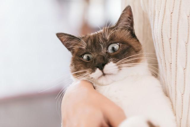 嫌がる猫の写真
