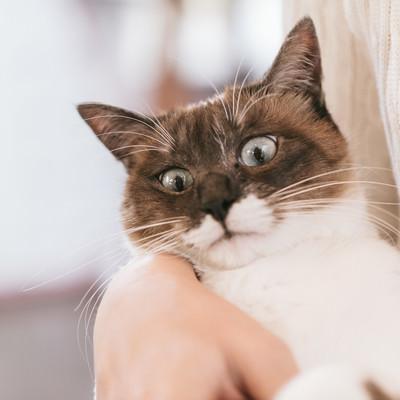 「嫌がる猫」の写真素材