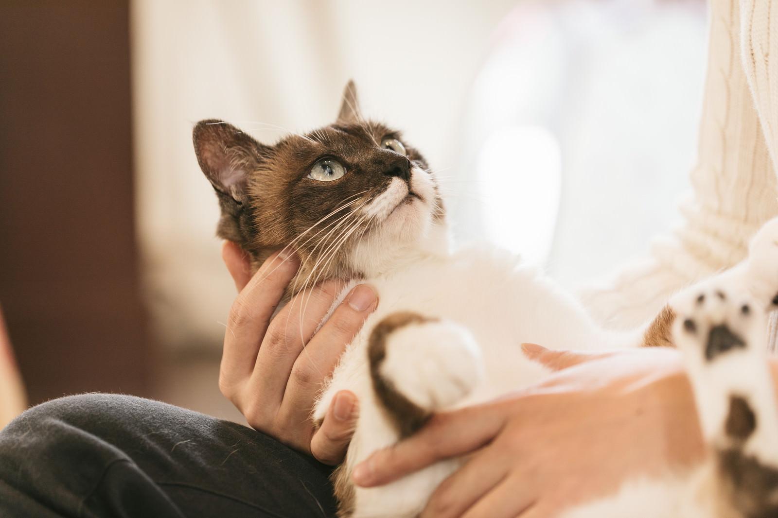 「おとなしく抱かれる猫おとなしく抱かれる猫」のフリー写真素材を拡大